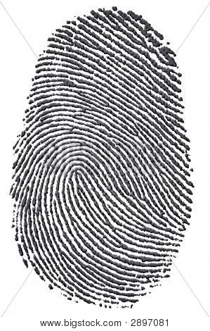 Carbon Fingerprint
