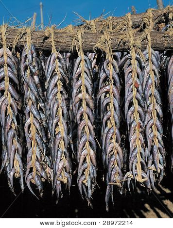 Stock Photo:  Fish drying in south korea
