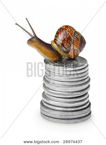 Snail on silver coins isolated on white