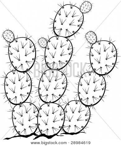 Stachelige Birne oder Nopal-Pflanze