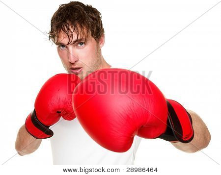 Fitness boxer boxing. Man punching with red boxing gloves isolated on white background. Fit fitness boxer sweating looking at camera. Caucasian male fitness model in his 20s.