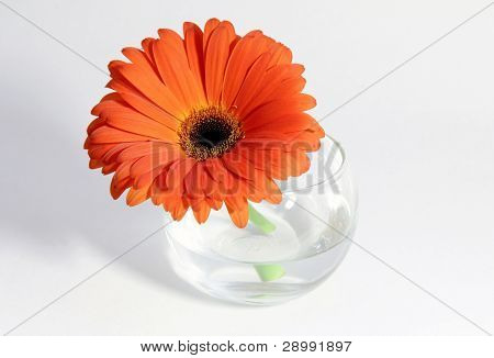 flower in a cup