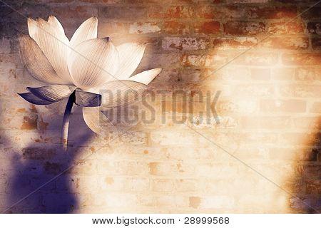 schöne Lotus für Hintergrund verwenden