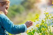Happy little boy having fun outdoors, sweet child enjoying fresh little yellow wildflowers, with ple poster