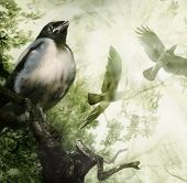 Baby Crow On A Branch Dreams Of Flying. Parents Soar In The Sun Rays. Illustration.  Made From Sever poster