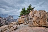 Rock with pine trees in cloudy weather. Seoraksan National Park, South Korea poster