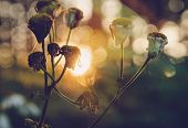 Nature Meadow Sunset. Bright Sunny Day In Meadow Background. Close Up Of Forest Flowers In Sunset.he poster