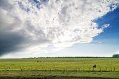 Prairie Summer Landscape poster