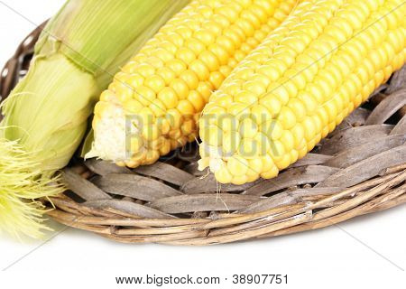 Fresh corn cobs on wicker mat isolated on white