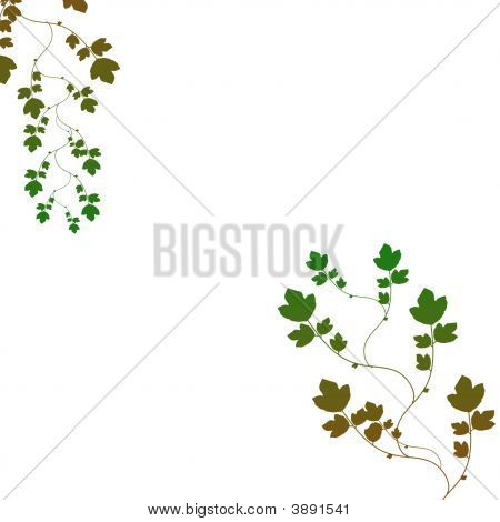 Leaves Foliage Background