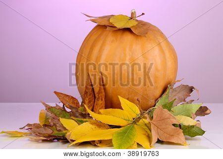 Ripe orange pumpkin with yellow autumn leaves on purple background