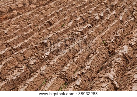 Straight furrows in a newly plowed field.