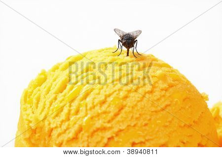 Small fly can't resist sweet taste of ice cream
