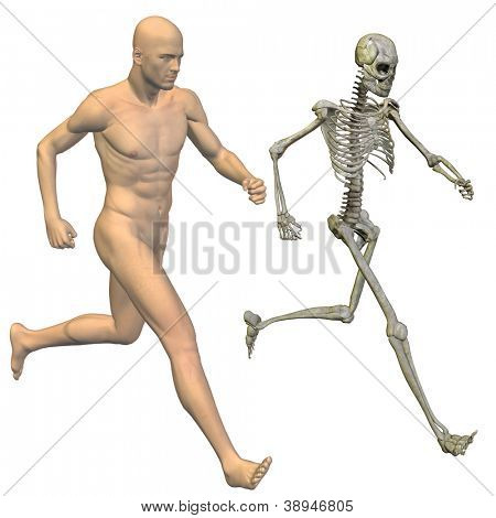 High resolution conceptual 3D human ideal for anatomy,medicine and health designs, isolated on white background. It is a man made of a skeleton and a transparent body as in a x-ray.A set or group