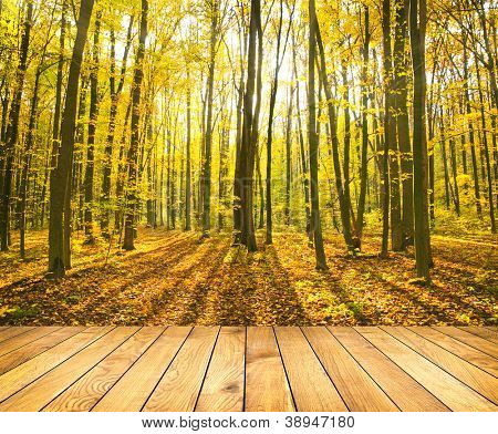 Beautiful morning in the misty autumn forest with sun rays with wooden palnks