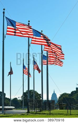 United States flags around the Washington Monument in Washington DC