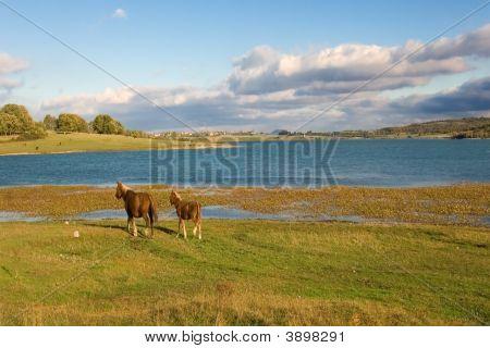 Marsh Of The Ebro Near Reinosa