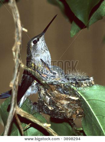 Hummer Nest