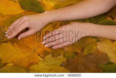 Female Hands Against Leaves