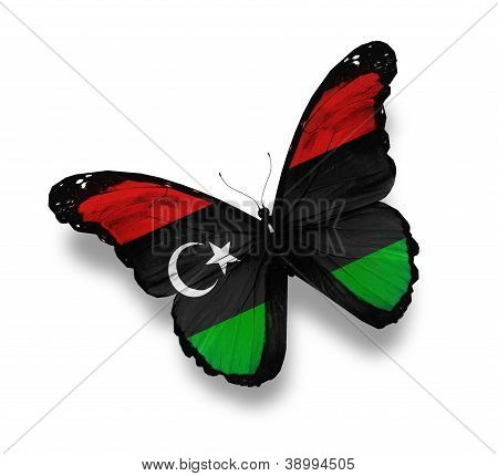 Libyan Flag Butterfly, Isolated On White