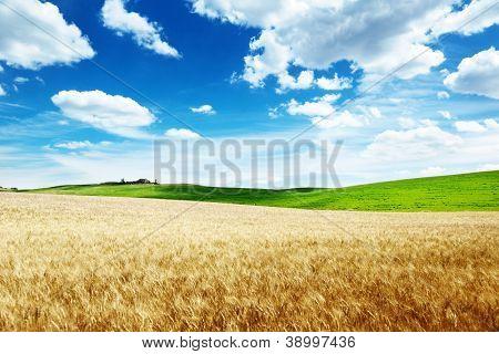 wheat hills Tuscany, Italy