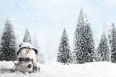 picture of coniferous forest  - Christmas Card - JPG
