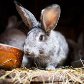 stock photo of rabbit hutch  - Cute rabbit popping out of a hutch  - JPG