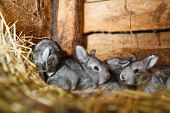picture of rabbit hutch  - Young rabbits in a hutch  - JPG