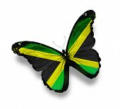 foto of jamaican  - Jamaican flag butterfly isolated on white background - JPG