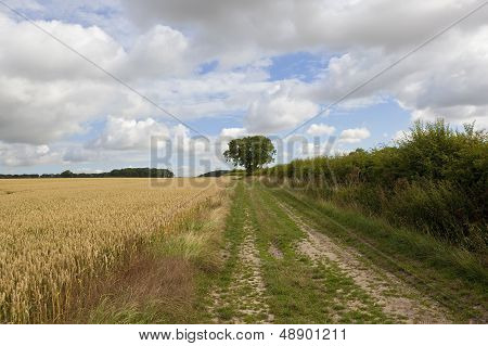 Wheat Field With Farm Track