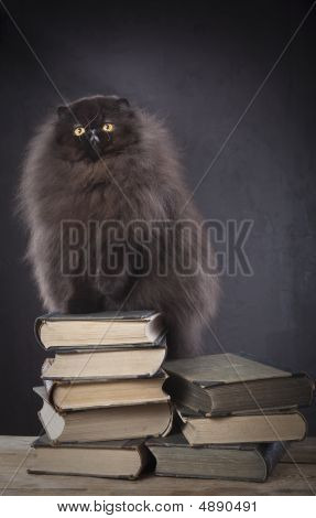 Long Haired Persian Cat On The Top Of Book Pile