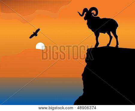 Mountain goat on a rock