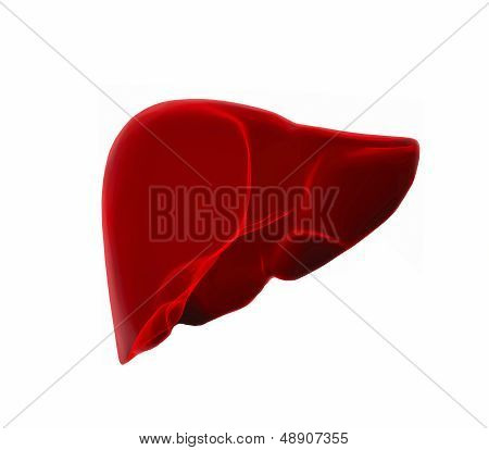 Human Liver In X-ray View