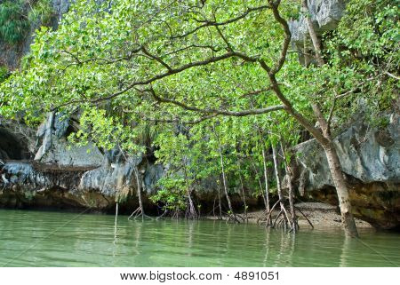 Mangrove Trees In The Water