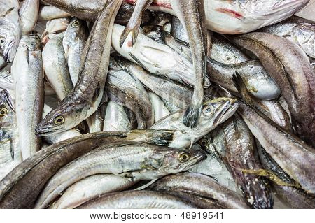 Fish Heap