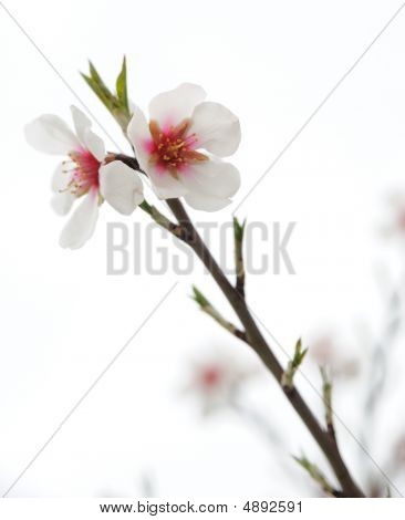 Flowers On A Branch