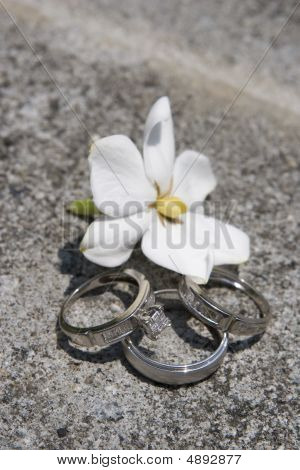 Rings On Granite With Flower