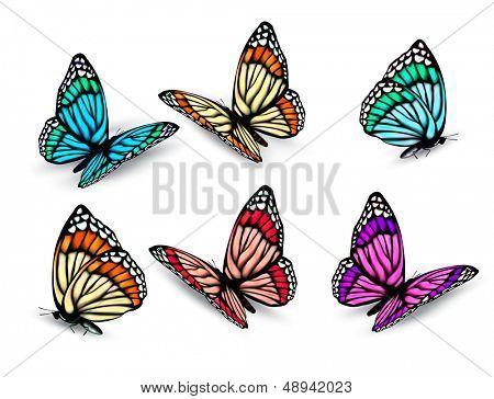 Conjunto de mariposas coloridas realistas. Vector