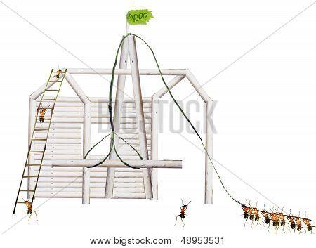 Ants Build Houses