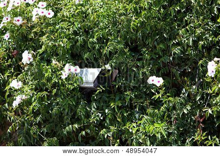 Security Camera Hidden In Greenery