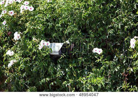 Security Camera Hidden In Greenery