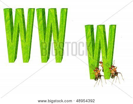 Ants And Network