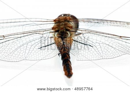 A Very Close up view of parts of a Dragonfly taken with a Digital Microscope. Some 5680 different species of dragonflies (Odonata) are known in the world today. Aka