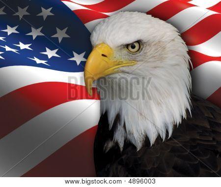 Bald Eagle / Us Flag Composition