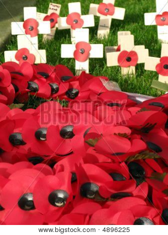Red Plastic Poppies
