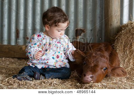 Infant Patting A Calf