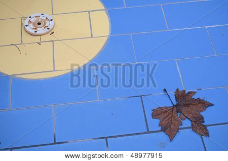Off-season Swimming Pool Close-up With Leaf