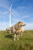 image of dike  - Sheep at a dike along a row of wind turbines - JPG