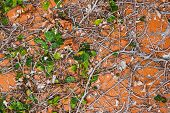 stock photo of climber plant  - Ivy Plant on Orange Wall Texture - JPG
