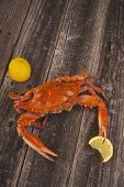 stock photo of cooked crab  - Fresh cooked crabs on a rustic background - JPG